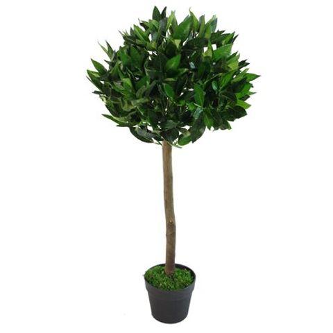 BOXED TOPIARY BAY TREE