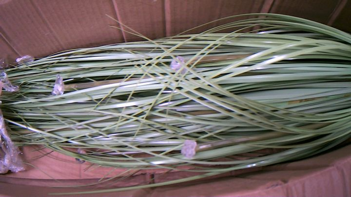 LED PAMPASS GRASS WITH LED LIGHT NATURAL
